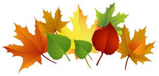 Image result for fall leaves jpg transparent