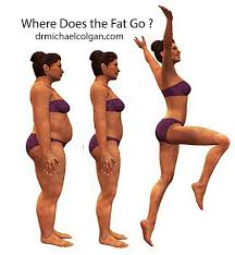 biochemistry health nutrition articles where does the fat go