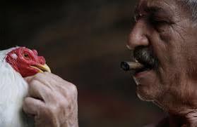 Alcona y las peleas de gallos en Cuba - Artículos - Opinión - Cuba ...