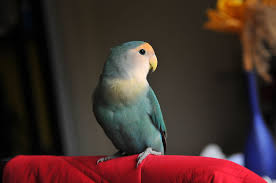 8 Top <b>Small Pet</b> Birds