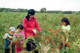 Image result for berry plants
