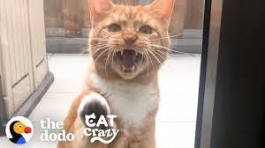 <b>Life</b> With A <b>Cat</b>   The Dodo <b>Cat</b> Crazy - YouTube