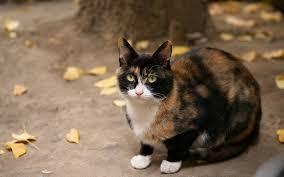 JewelClan cats Images?q=tbn:ANd9GcSsUnu7x_61OwWb8Zhwk3Jo0L9nH8eVZgAoHEc4a_2GsH9CnIKIDg