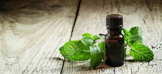 9 Uses for <b>Refreshing</b> Peppermint <b>Oil</b> - Healthy Perspectives