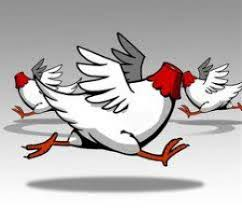 Image result for chickens with heads cut off humor pics