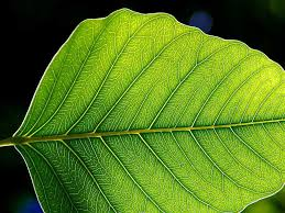 essay about plants and their importance how can we make plants  the leaf architecture probably arose multiple times in the plant lineage