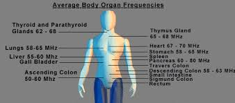Image result for BODY MHZ