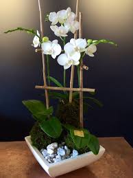 day orchid decor: decor triplet orchid kokedama moss ball bloom couture
