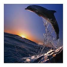 Холст 50X50 <b>Printio</b> Дельфин, Продукты, Напитки, Табак ...