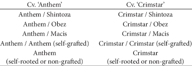 Grafting combinations used in the experiments. | Download Table