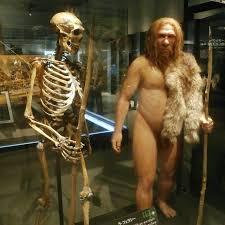 Kuvahaun tulos haulle neandertalilaiset jpg