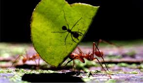 Image result for images ant colonies