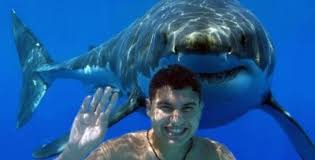 Image result for swimming with the sharks images