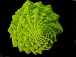 Image result for natural fractals