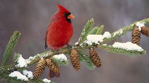 Image result for winter bird photos