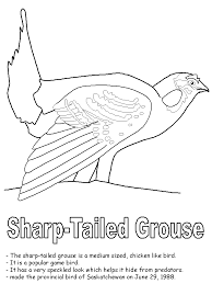 Small Picture Sharp tailed Grouse coloring page