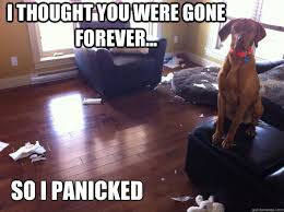 I thought you were gone forever... So I panicked - whistler ... via Relatably.com