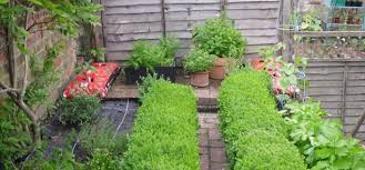 Small Picture How To Grow Herbs Thompson Morgan