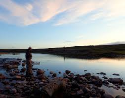 trout talk first light on a southern alberta tailwater coyotes yelp along the ridge and a nighthawk swoops overhead a fish rises and another