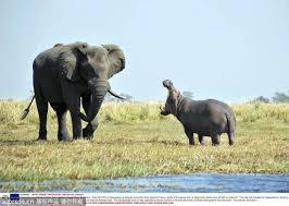 「大象寵物圖」的圖片搜尋結果