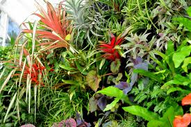 indoor living wall system tropical plant