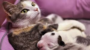 <b>What's your favourite</b> animal and why? - CBBC Newsround
