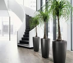 amazing modern indoor pots for plants 2014 amazing office plants