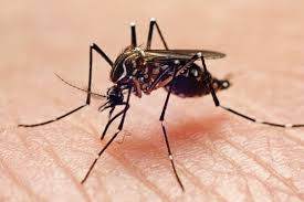 The 8 Best <b>Mosquito</b> Traps of 2021
