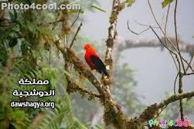 صور غابات روووعة images?q=tbn:ANd9GcS