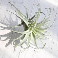 Best value Artificial <b>Air Plant</b> – Great deals on Artificial <b>Air Plant</b> from ...