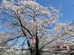 <b>Eva Korean</b> Akasuri (Taito, Japan): Hours, Address - TripAdvisor