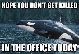 Compassionate Killer Whale memes | quickmeme via Relatably.com