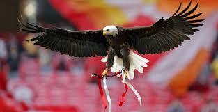 Resultado de imagem para fotos ou imagens da águia do Benfica