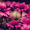 <b>Pink Flower</b> Wallpapers HD Best New Tab