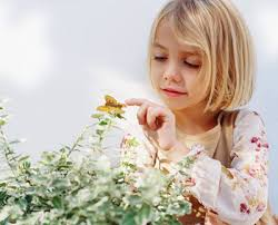 Will a <b>butterfly die</b> if I touch its <b>wings</b>? | HowStuffWorks