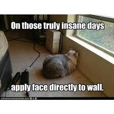Cat meme | Animals | Pinterest | Bad Day, Cats Humor and Funny Memes via Relatably.com