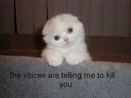 Fluffy White Cat | Know Your Meme via Relatably.com