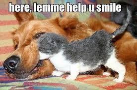 here-lemme-help-you-smile-funny-dog-and-cat-meme.jpg via Relatably.com