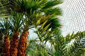 Семена пальмы в интернет магазине семян декоративных ...
