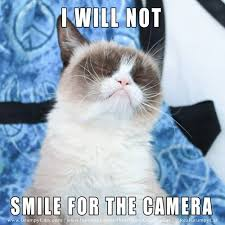 I Will Not Cat Meme - Cat Planet | Cat Planet via Relatably.com
