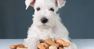 Factors to consider when choosing a doog food - <b>1st Choice</b> Russia