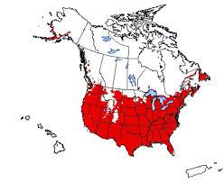 Weed Risk Assessment for Aegilops geniculata Roth, Aegilops ...
