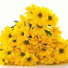Resultado de imagen para flores amarillas para fin de año