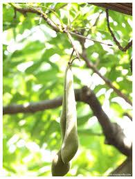 bean trees lou ann essay  bean trees lou ann essay
