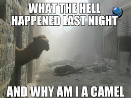 What The Hell Happened Last Night And Why Am I A Camel | WeKnowMemes via Relatably.com