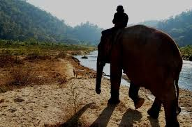 photo essay   elephant nature parkthe river   elephant