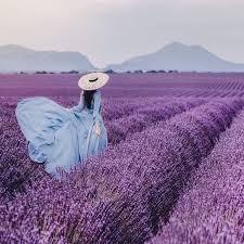 <b>Lavender Fields</b> | <b>Lavender fields</b> photography, Beautiful ...