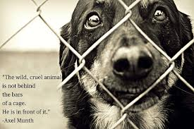 Stop Animal Abuse Quotes. QuotesGram via Relatably.com