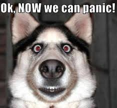 Now Panic Meme | Slapcaption.com | Animal Instinct. | Pinterest ... via Relatably.com