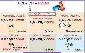 Урок №54. <b>Аминокислоты</b>, их строение, изомерия и свойства ...